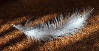 Nettoyage du tapis : comment y procéder? 2